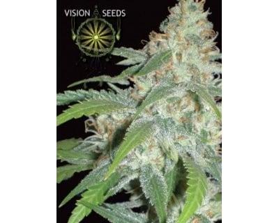amnesia-auto-vision-seeds